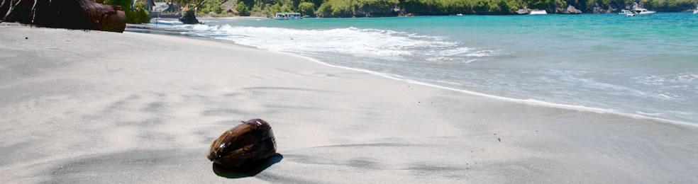 Bali Hai Aristocat Castaway