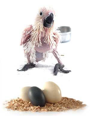 Bird Conservation Eggs