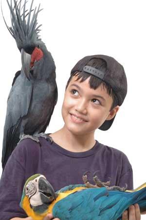 Bird Park Meet the Bird Star