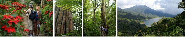 Jungle Trekking 2