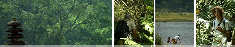 Jungle Trekking 3