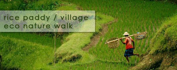 Rice Padi Trekking 1