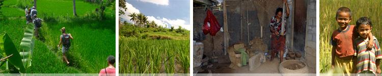 Rice Padi Trekking 5