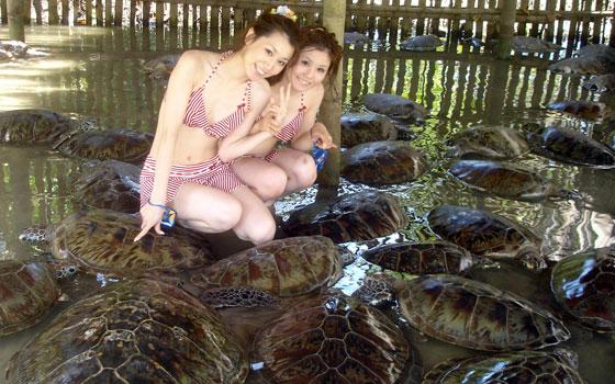 Turtle Island Water Sport