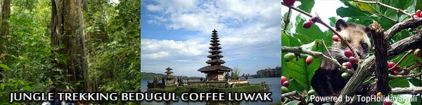 Jungle-Trekking-Bedugul-Coffee-Luwak