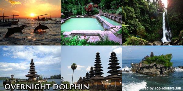 Overnight-Dolphin-2